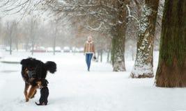 Les amis quadrupèdes de promenade de matin leur neige de joie ne connaît aucune limite Photo stock