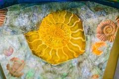 Les ammonites sont peut-être le fossile le plus largement connu Le plus tôt Photographie stock