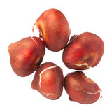 Les ampoules de tulipe d'isolement sur le fond blanc, se ferment  Photo stock