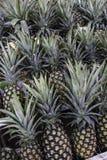Les ananas Photographie stock libre de droits