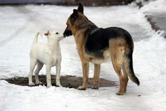 Les anciens chiens égarés veulent également être heureux dans la famille photo libre de droits
