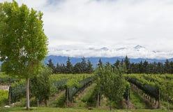 Les Andes et vignoble, vallée d'Uco, Mendoza Photos libres de droits