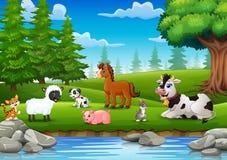 Les animaux de ferme apprécient la nature par la rivière Image stock