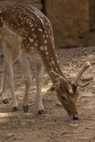 Les animaux de zoo dans le zoo de Limassol se garent, la Chypre Photo stock
