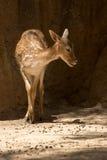 Les animaux de zoo dans le zoo de Limassol se garent, la Chypre Images stock