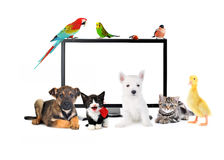 Les animaux mignons s'approchent du moniteur d'affichage à cristaux liquides Images stock