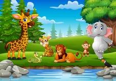 Les animaux sauvages apprécient la nature par la rivière Image stock