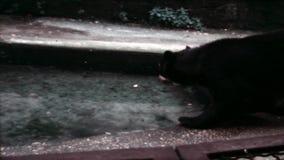les années 1970, Rome, Italie - tir visuel de cru sur le zoo de Rome Soutenez jouer avec de l'eau banque de vidéos