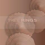 Les anneaux d'arbre avec ont vu pour couper le tronc d'arbre Image libre de droits