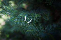 Les anneaux de mariage accrochent sur les branches du sapin Photo libre de droits