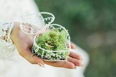 Les anneaux de mariage dans une boîte ont rempli de la mousse sur l'herbe verte Photo libre de droits