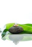 Les anneaux de mariage ont placé sur une pierre avec les feuilles vertes et la réflexion Photos stock