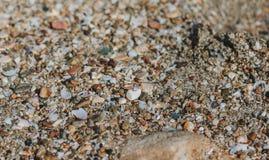 Les anneaux de mariage se trouvent sur le sable sur la plage près de l'eau photos libres de droits