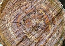Les anneaux sur un vieux tronçon d'arbre en parc Images libres de droits