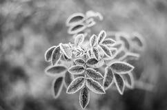 Les approches d'hiver. Photo libre de droits