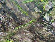 Les aquarelles peignent peint avec la brosse sur un papier Photos libres de droits