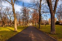 Les arbres à côté d'une route dans une ville se garent images libres de droits