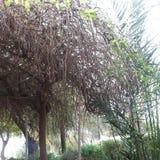 les arbres à la cour Image stock
