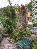 Les arbres énormes déracinés Photo stock