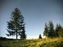 Les arbres Images stock
