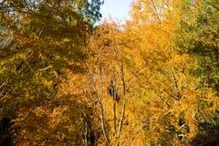 Les arbres Image libre de droits