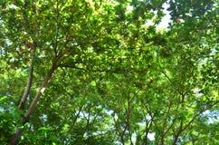 Les arbres Photos libres de droits
