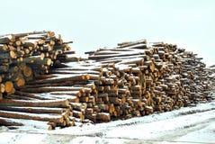 Les arbres abattus pour la production sous la neige provoquée par un stor de neige Photographie stock libre de droits