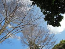 Les arbres aiment le ciel-tisserand fabriquer image libre de droits