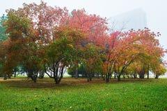 Les arbres automnaux polychromes et la pelouse verte Images stock