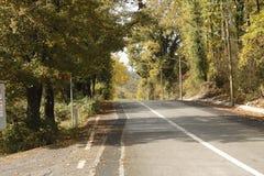 Les arbres autour de la route images stock
