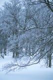 Les arbres avec de la glace ont couvert des branches de neige à la ferme dans la zone rurale Photos libres de droits