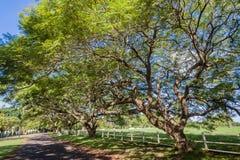 Les arbres ont au loin répandu la route d'étendue image stock