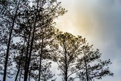 Les arbres brumeux dans un arbre forestier complète la texture Photographie stock