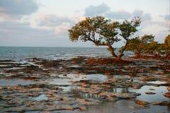 Arbres sur une plage de récif. image stock