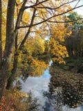 Les arbres colorés d'automne s'approchent de la rivière, Lithuanie Photographie stock libre de droits