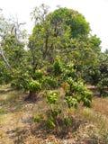 Les arbres commencent à se développer pendant l'été Ce qui brillait au milieu de la forêt au milieu du jardin photographie stock libre de droits