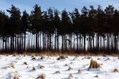 Les arbres coniféres dans une neige ont couvert le paysage Photos stock