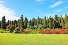 Les arbres coniféres et les buissons rouges de floraison photographie stock libre de droits