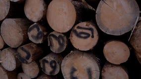 Les arbres coupés se trouvent sur l'un l'autre Entrepôt de bois abattu banque de vidéos