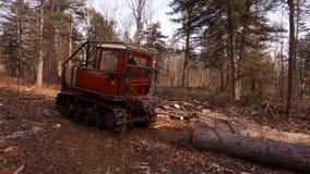 Les arbres coupés se trouvent sur l'un l'autre Entrepôt de bois abattu clips vidéos
