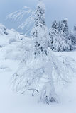 Les arbres couverts de neige sur une montagne complètent Image stock