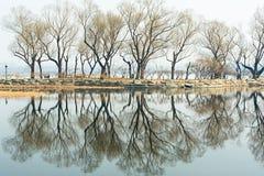 Les arbres dénudés au bord de lac Images libres de droits
