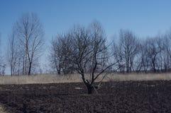 les arbres d'arbre de nature aménagent le ciel en parc nu d'arbre de premier ressort de champ Image libre de droits
