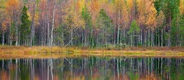 Les arbres d'automne dans les arbres de vert forêt et de jaune de la Finlande avec la réflexion dans l'eau immobile apprêtent Pay Image stock
