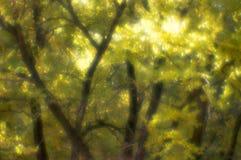 Les arbres d'automne ont brouillé le monocle. Photos stock