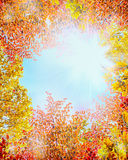 Les arbres d'automne part sur le ciel bleu de branche et d'espace libre avec le soleil, fond abstrait de nature Photographie stock libre de droits