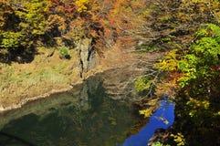 Les arbres d'automne se sont reflétés dans le fleuve de Tonegawa Image libre de droits