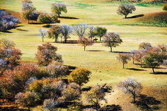 Les arbres d'automne sur la steppe Photographie stock