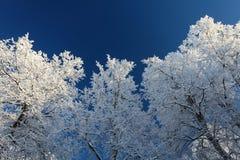 Les arbres d'hiver avec la neige et le ciel bleu profond photos stock