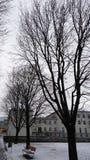 Les arbres d'hiver sans feuilles s'approchent de l'école Photos libres de droits